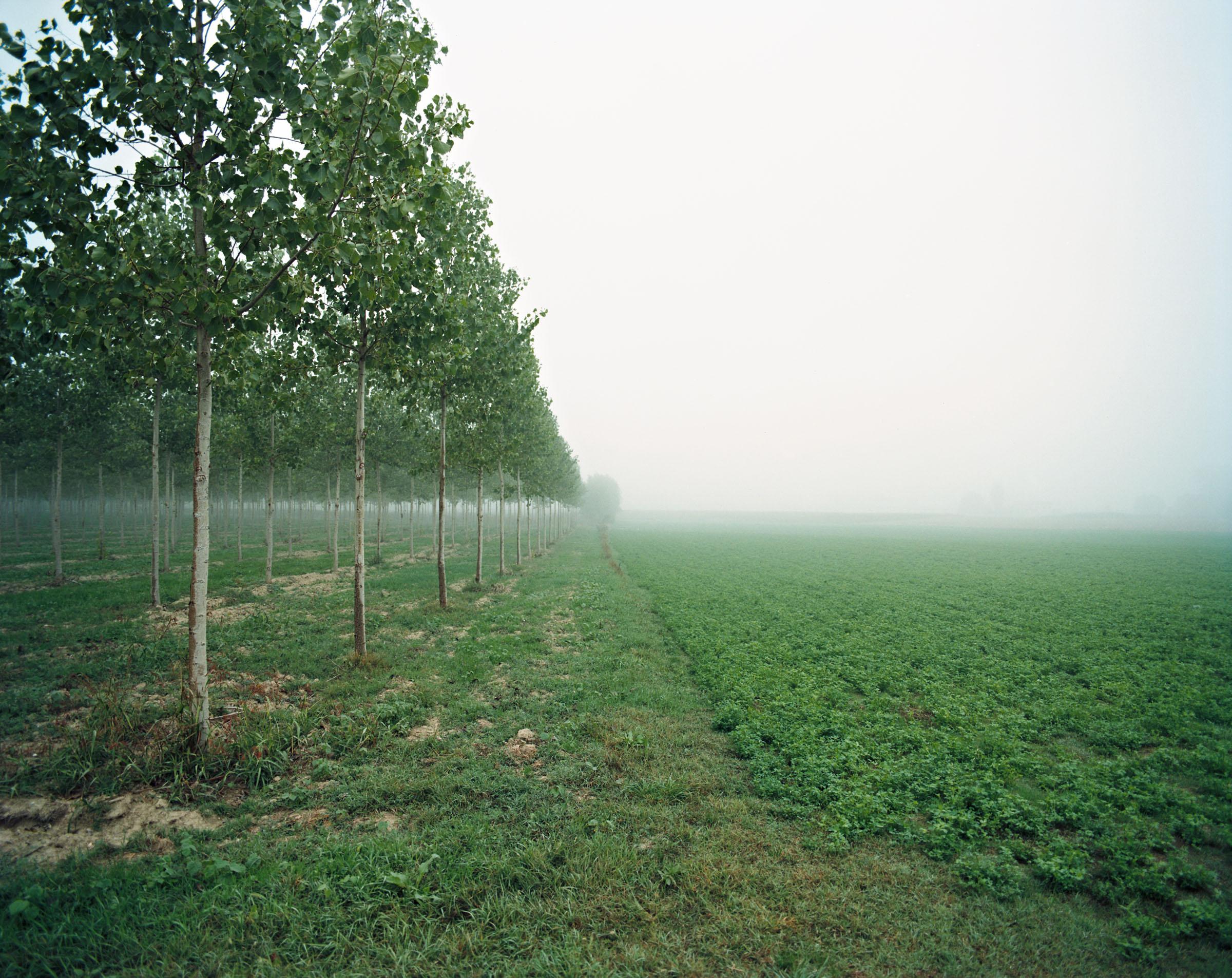 mondo piccolo alberi